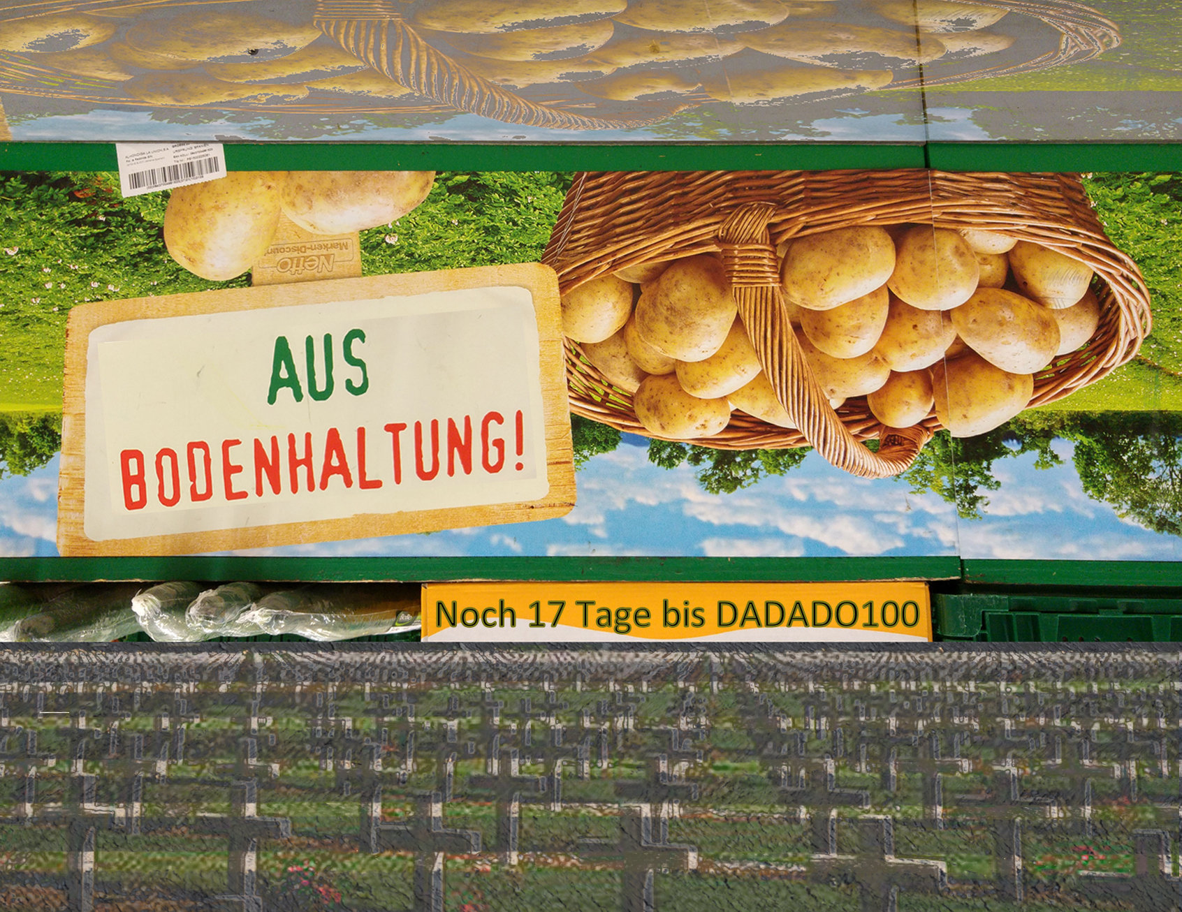 Kartoffeln gedreht aus Bodenhaltung 17Tage noch2a